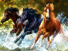 Cavalos selvagens.                                                                                                                                                                                 Mais