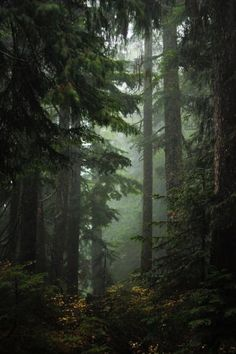90377 Hiking is the best way to spend your time seriously by Anna Stanciu on F Dark Green Aesthetic, Nature Aesthetic, Photographie Indie, Slytherin Aesthetic, Dark Forest, Foggy Forest, Forest Mountain, Nature Photography, Photography Tips
