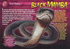 Weird N Wild Creatures Toxic Terrors