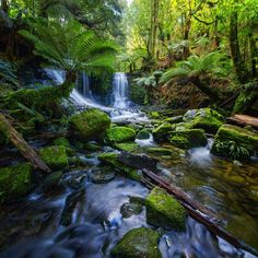 Mount Field National Park, Mount Field, Australia — by Lauren Bath. Horseshoe Falls in Mt Field National Park, Tasmania, is well worth the 20 minute hike to get to. I spent the extra...