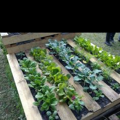 Garden fun by RECYCLING a wooden  palette ....