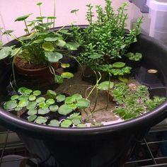 40 Small Balcony Garden Ideas For Decorate Your Apartment - Balkon Garten 100 Indoor Pond, Indoor Water Garden, Small Balcony Garden, Backyard Water Feature, Ponds Backyard, Balcony Gardening, Small Balconies, Small Water Gardens, Container Water Gardens