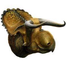 Nasutoceratops titusi, eine neue Dinosaurierart, wurde im Grand Staircase-Escalante National Monument in Utah entdeckt. Spektrum.de © Lukas Panzarin für Utah Museum of Natural History