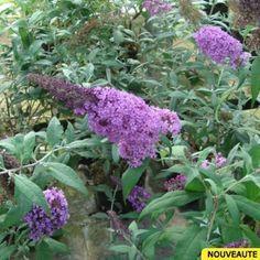 Recette de #jardin N°14 ! 2) Le Buddleia davidii Pink Delight - Arbre aux papillons vigoureux à fleurs rose vif. #jardinrose #rose #mauve #pourpre #violet #promessedefleurs #fleurs #garden http://www.promessedefleurs.com/arbustes/arbustes-par-variete/buddleias/buddleia-davidii-pink-delight-arbre-aux-papillons-p-5968.html
