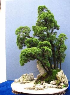 "In bonsai growing, the slanting style is one of several styles that are used to shape and ""train"" the bonsai tree. Plantas Bonsai, Bonsai Forest, Bonsai Garden, Succulents Garden, Ikebana, Bonsai Plante, Bonsai Styles, Indoor Bonsai, Miniature Plants"