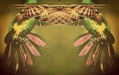 Hummingbird grip. ---own creation---