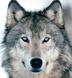 Magnifique, de beaux yeux bleus