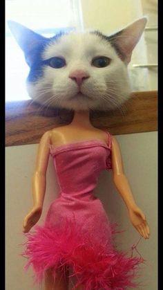 Barbie-Cat!! :)