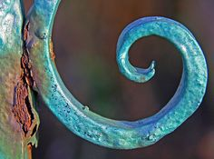 rust and curl | Flickr - Photo Sharing!