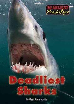 Mako shark - by Chris Fallows Orcas, Shark Bait, Shark Fish, Shark Pictures, Species Of Sharks, Underwater Life, Great White Shark, Ocean Creatures, Shark Week