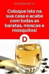 Acabar com insetos   Coloque isto na sua casa e acabe com todas as baratas, moscas e mosquitos!