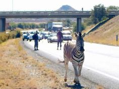 Only in Africa! (only in africa, funny africa) - ODDEE Kwazulu Natal, Flight And Hotel, Out Of Africa, Safari Animals, My Land, African History, My People, South Africa, Wildlife