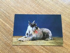 Vintage Schnauzer Postcard by ElkHugsVintage on Etsy