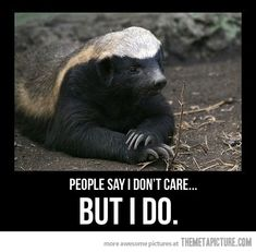 Misunderstood Honey Badger…