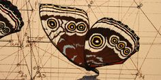 Wildly Detailed Drawings That Combine Math and Butterflies | Wired Design | Wired.com