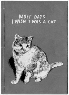 Most Days I Wish I Was Cat #LiteraryCat