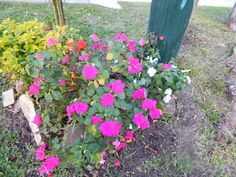 flores - cerca de mi casa no se como se llaman - Fotolog
