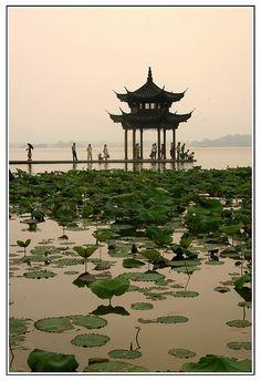 Hangzhou Lake, China. Vue superbe, immense champ de lotus, un chinois nous explique que les racines (roots) de lotus se mangent en lamelles et c'est délicieux.