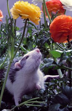 Sweet rat with flowers