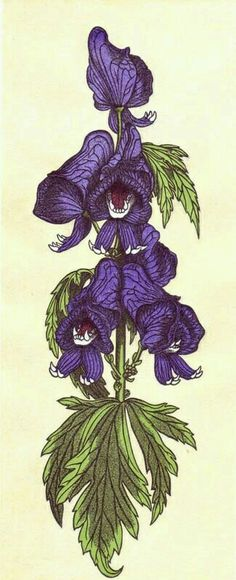 Monkshood, more commonly known as wolfsbane ;)