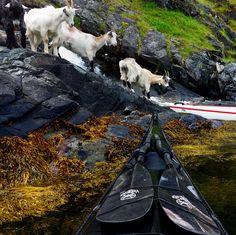 What do You need for your Kayak today? www.TheRiverRuns.info #kayaking #kayak #seakayaking