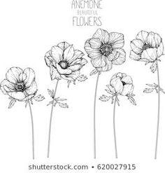 Fiori Facili Da Disegnare Disegno Di Un Fiore Rametto