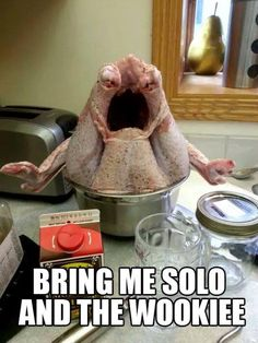 Happy Thanksgiving! Here Are 20 Super Funny Turkey Day Photos: 20 Super Funny Turkey Day Photos