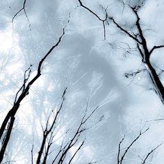 【monteverdi5488】さんのInstagramの写真をピンしています。《Frozen forest  #木#森#林#氷#風景#tree #forest #wood #ice#snow#landscape #abstract #artphotography》