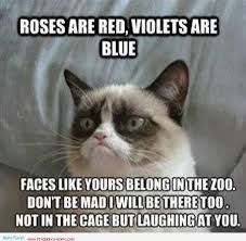 14 Hilarious Grumpy Cat Memes That Will Make You Smile - Funny Cat Quotes Grumpy Cat Quotes, Funny Grumpy Cat Memes, Funny Animal Jokes, Cat Jokes, Cute Funny Animals, Funny Animal Pictures, Grumpy Kitty, Animal Pics, Funny Cats