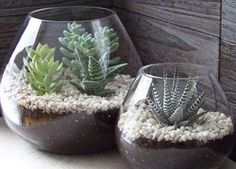 Photo: Perfect desktop decor. Succulent gardens for small spaces. http://pin.it/vbZf8a9
