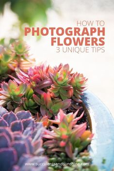 Learn how to take better photos of flowers even in hard lighting