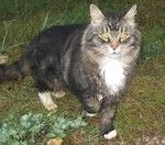 Signs your senior cat is going senile - by Brenda Nelson - Helium