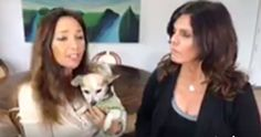 Outrage over theU.S. Department of Agriculture's purge of animal welfare information, crippling animal lovers and groups trying to help animals! Noted animal activist and puppy mill investig…