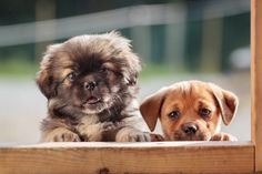 Cutest puppies ever!