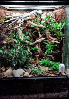 Crested Gecko Vivarium - Dendroboard - Anita Smith Home Terrariums Gecko, Bartagamen Terrarium, Tree Frog Terrarium, Leopard Gecko Terrarium, Terrarium Reptile, Turtle Terrarium, Crested Gecko Habitat, Crested Gecko Vivarium, Crested Gecko Care