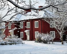 Red and White Winter