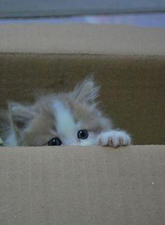 Peek...a..boo!
