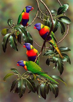 Rosella parrots. Quite a common sight in Australia.