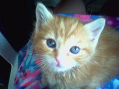 Redford the kitten