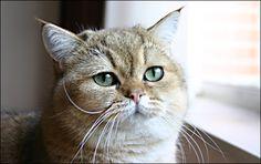 cute fatty cat :D
