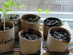 Sowing seeds in toilet paper tubes Preschool Garden, Grocery Store, Toilet Paper, Planter Pots, Seeds, Healthy Recipes, Desserts, Plants, Food