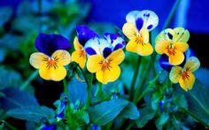 Beautiful Spring Flowers Wallpapers Bing in Bing Wallpaper Winter Flowers