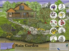 You can create your own native garden with low-water plants that withstand droughts.