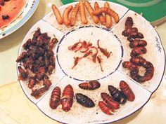 Degusta+ Exquisitos Platos y Tapas: Insectos Comestibles