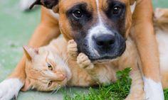 Hund und Katze gemeinsam ergeben ein schönes Tierfotografie-Motiv.