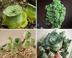Welcome to the wonderful and weird world of succulents! These ornamental plants come in some very surprising shapes that make them look like something from a fantasy illustrator's dreams. Succulents Tumblr, Cool Succulents, Types Of Succulents Plants, Blooming Succulents, Echeveria, Succulent Gardening, Planting Succulents, Succulent Plants, House Plants Decor