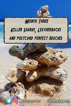 Month Three - Killer sharks, Turtles and Postcard Perfect Beaches - Dante harker