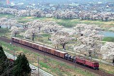 Kano鉄道局 ED75 1~100