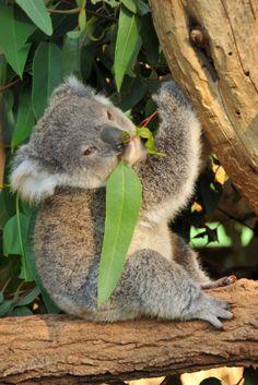 Hangout with the wildlife of Australia  www.transfercar.com.au