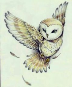grafika owl and drawing